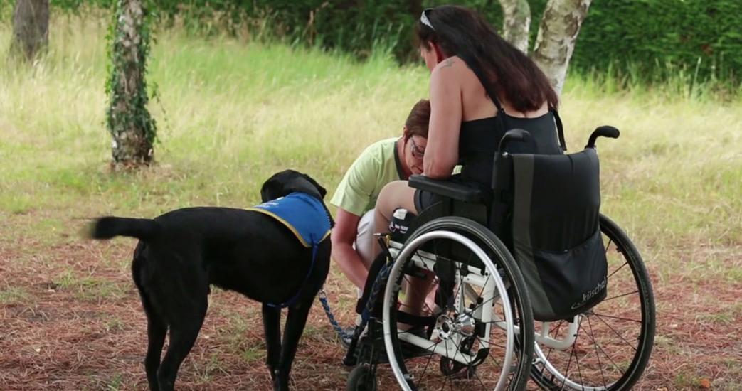 chien guide, femme, fauteuil roulant, nature